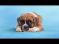 This Puppy Video is About to Go Viral for All the Best Reasons ~ Share for Dogs. This Puppy Video is About to Go Viral for All the Best Reasons. By watching and sharing this video, you will have raised money for dogs in need. http://thebarkpost.com/share-for-dogs-campaign/?utm_source=Sailthru&utm_medium=email&utm_term=BARKPOST_ISNOT_%28RENEWING%7CCANCELLED%29&utm_campaign=Newsletter_4.14.2014_barkbox&utm_content=B&email=wowwhatagreatday%40aol.com