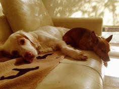 Mac & Daphne... sleepy!