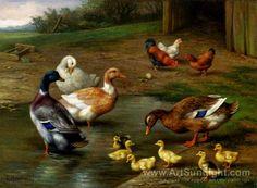 Google Image Result for http://www.artsunlight.com/NN/N-H0025/N-H0025-007-chickens-ducks-and-ducklings-paddling.jpg