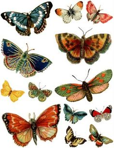 Free Butterfly Printables.