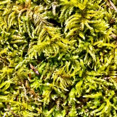 The texture of moss