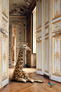 {arts & culture | photography by karen knorr, london}