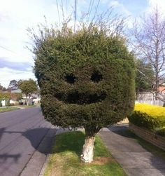 This tree is putting a brave face on things, but god knows there isnt much to smile about, what with everything thats been in the news.