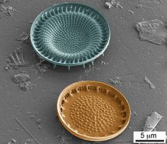 Shells of centric diatoms.
