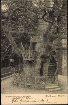 """TheChêne chapelle(""""chapel oak"""") is anoaktree located inAllouville-BellefosseinSeine-Maritime, France. It is between 800and 1,200years old. Its hollow trunk hosts twochapels, which were built there in 1669."""
