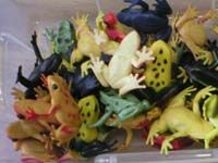 frog, preschool themes, pond theme, pond life