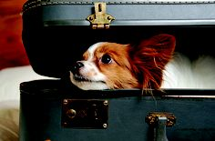 How to Prepare Pets for Relocation