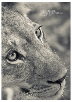 Feb 2015 The Safari Collection are running a Cultural Photographic Safari with photographer @robindmoore