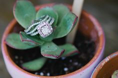 pave setting, photo by Sue Wheelock Photography http://ruffledblog.com/san-juan-capistrano-wedding-with-handmade-touches #weddingring #rings