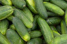 cucumb sandwich