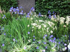 Luzula nivea, iris,geranium
