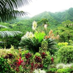 St. Vincent, Grenadines Rain Forest