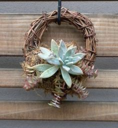 Succulent wreath- so simple and sweet   #succulentssimplified