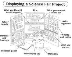 Information display board should have; link has photos from lots of science fair displays.