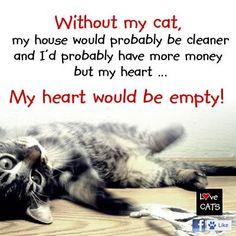 crazy cats, heart, fur, burmese cats, dog, crazy cat lady, quot, baby cats, true stories