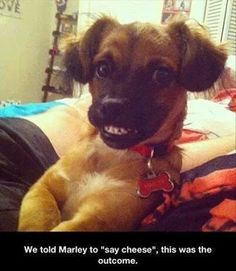 "Marley says, ""Cheese!"""
