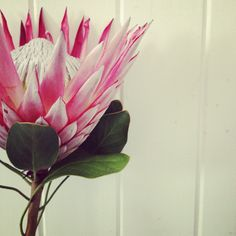 We planted a King Protea which is due to bloom very soon.  www.theblinkwater.com