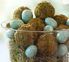 Moss balls and robin's eggs