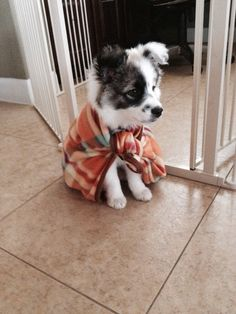 anim, australian shepherds, heroes, dogs, little puppies, capes, german shepherds, blankets, fluffy puppies
