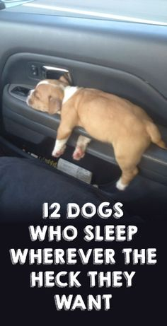 The 3rd what.... what the heck? LOL http://theilovedogssite.com/12-dogs-who-sleep-wherever-the-heck-they-want/