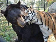 Friends! Tiger. Bear.