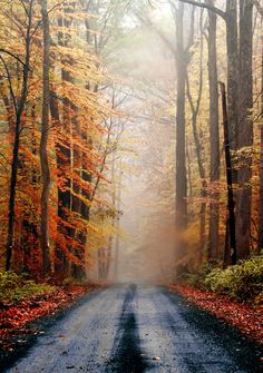 ✯ Lovely October country roads, tree, season, back roads, color, path, walk, the road, new jersey