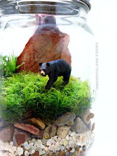 Black Bear Terrarium
