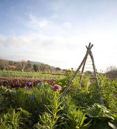 Sky's the Limit: Trellis Your Veggies