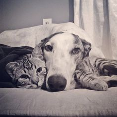 BFF cat and dog