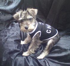 Chanel Dog T-Shirt