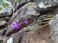 pedras e flores