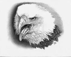 the american bald eagle by ~winstonscreator on deviantART bald eagles