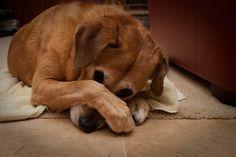 Cómo evitar que tu casa huela a perro