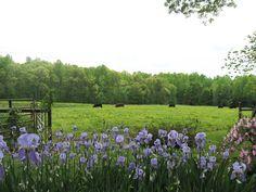 One of the pastures at Cedar Grove Windy Hill Farm, Cedar Grove, NC.