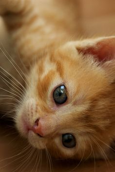 baby orange kitty