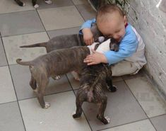 animals, puppies, dogs, the kiss, kid pictures, pets, pet photos, pit bull, friend