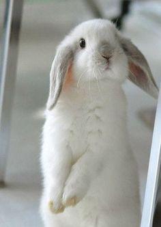 Lapin ~ Rabbit
