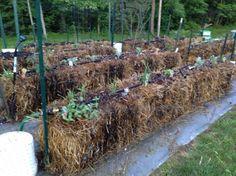 Watering a Straw Bale Garden