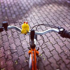 Bike tour Berlin <3. Bike from fat tire tours, nederlandse gids via gidsy.com