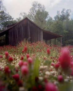 flowers by the barn