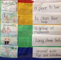 read vocabulari, backpacks, drawings, animals, monkeys, vocabulari idea, learning, informational writing, first grade