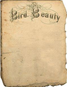 vintage printable bird beauty