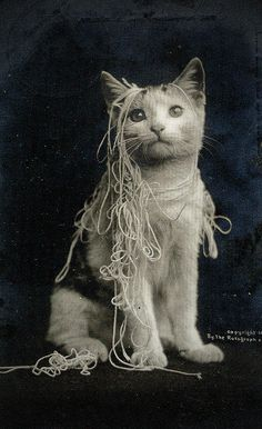 Vintage Cat with spaghetti by fidgetrainbowtree, via Flickr