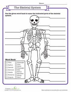 Worksheets: Skeletal System Quiz