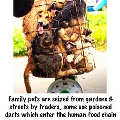 Fight with Chinese animal activists suffer pet theft&abuse due to no animal welfare laws #cancelYulinDogMeatFestival pic.twitter.com/63XX47L6sA
