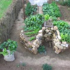 Called a keyhole raised bed: a circular raised bed with a pathway directly into the center of it. With a shape like this, you can have access to the entire bed without stepping into it.
