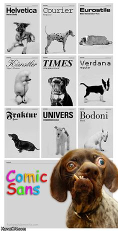 I'm so torn here - my utter disdain for comic sans finds this funny - and my sympathy for this peculiar little guy is making me feel bad for him being its poster-pup...
