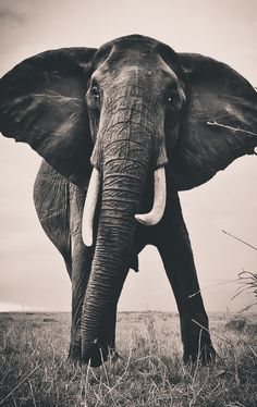 Elephant Encounter by David Lloyd #wildandfree