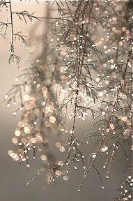 tree, snow, winter wonderland, frost, branch