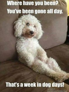 dog days, puppi